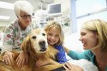 Pet Therapy Plr Articles